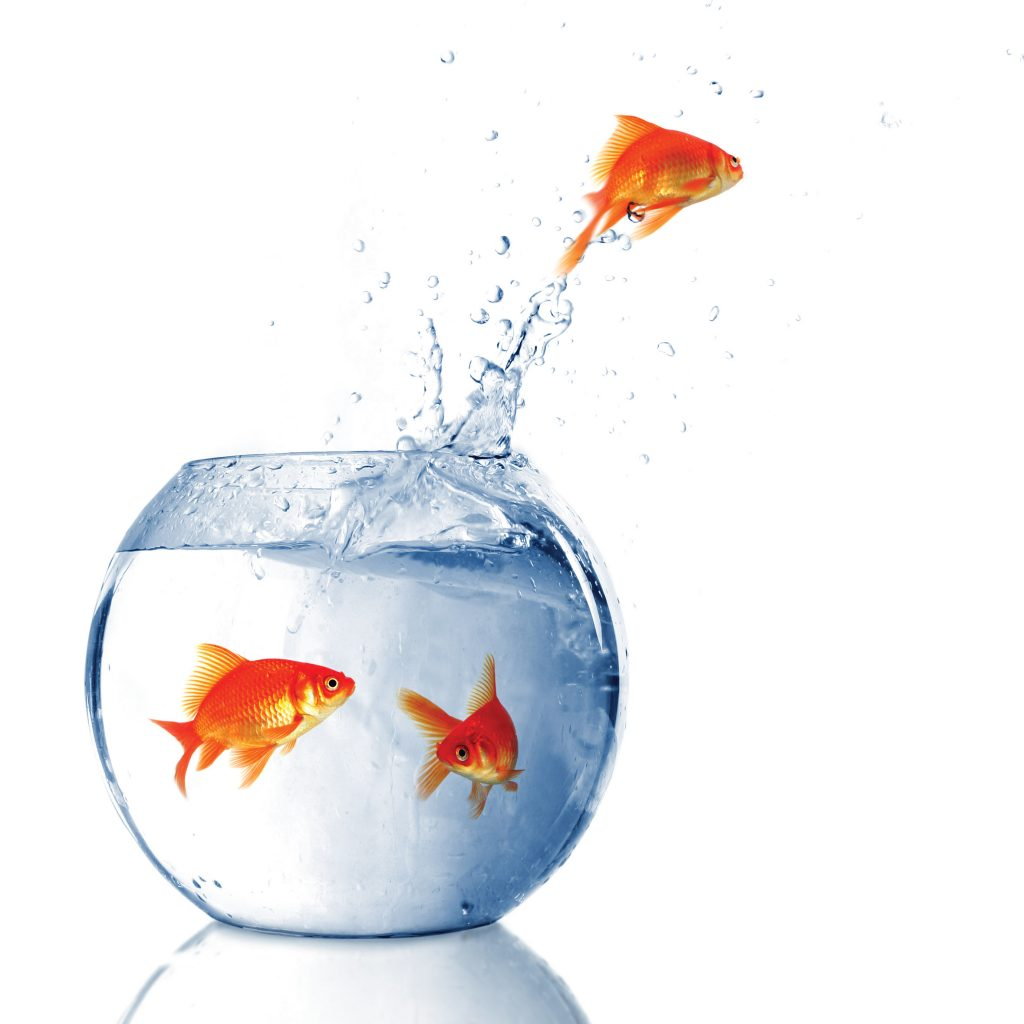 Xantias Financial Management, wealth creation, financial advice , management, financial services, financial advisory, careers